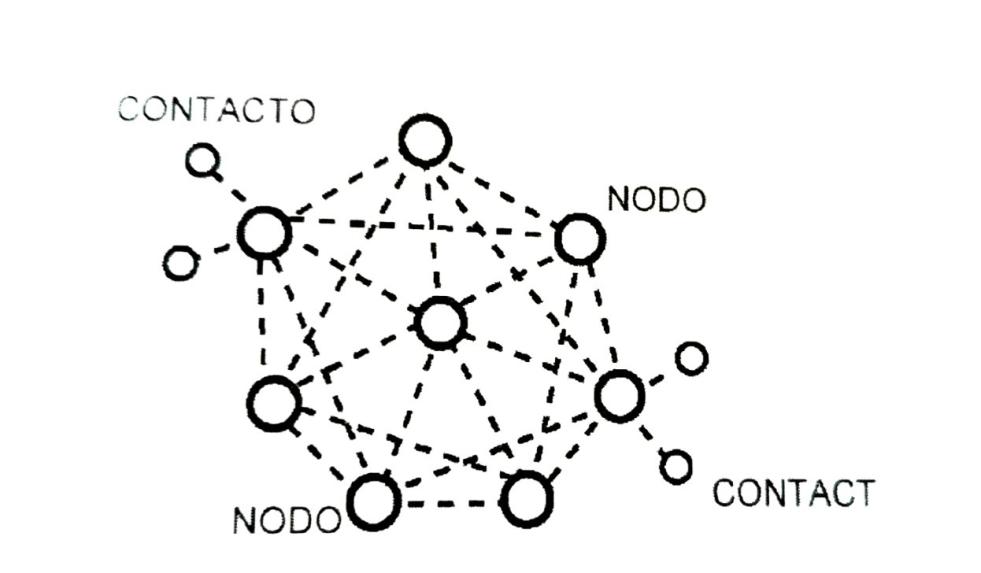 Spider web organization